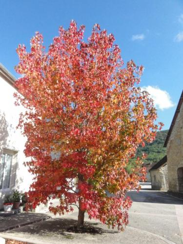 photo-village-arbres-3